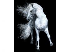 نخ و نقشه آماده بافت تابلو فرش اسب سفید با پس زمینه سیاه - کد 1512